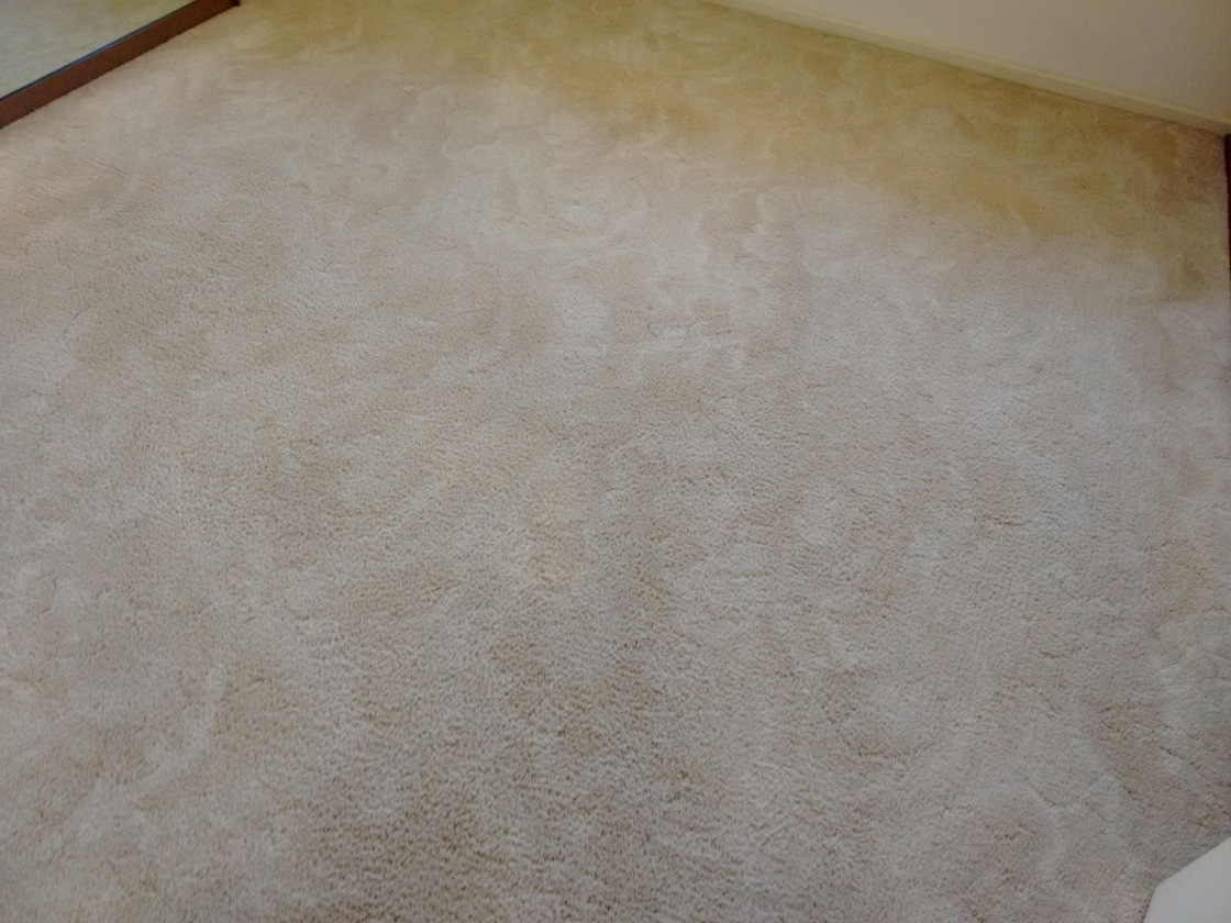 Carpet Cleaner Berri S.A, Carpet Cleaning Renmark, Loxton Carpet Cleaner, Barmera Carpet Cleaning, Waikerie Carpet Cleaner.