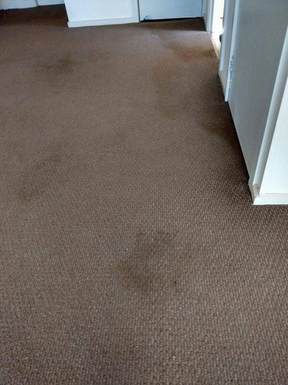 Before Carpet Cleaning Riverland